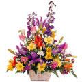 Frescura Floral, Huechuraba (Santiago)