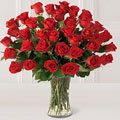 Rosas de Amor, Peru, Lima-Bellavista