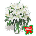 Lilies for Christmas, -Rep. Dominicana