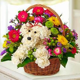 Increíble Perrito Floral