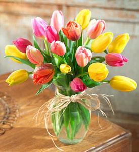 Tulipanes Para Ti
