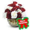 Holiday Roses, -Ecuador