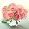 Bowl Roses, Depto. de Guatemala - Zona 10