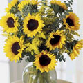 Sunflower Radiance, Mexico, Merida-Yucatan
