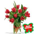 Rojos Tulipanes, -Mexico