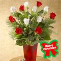Holiday Special Roses, -Peru