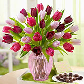 Charmed Tulips OFFER!, USA, Texas