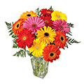 Gerberas Love, Brazil, Rn - Rio Grande Do Norte