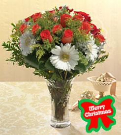 test3Christmas Flower Surprise, Venezuela, Merida