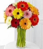 Seasonal Gerberas, USA, Texas
