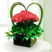Love Roses, Mexico, Jerez-Zacatecas