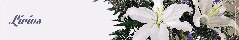 Envia Lirios A Quevedo Flores Quevedo Premium Florist