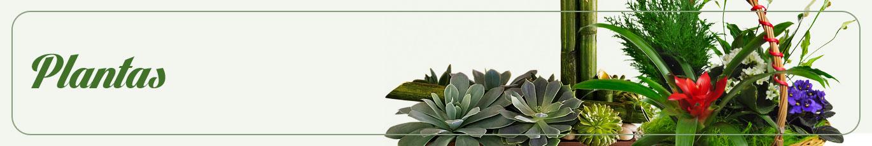 Envia Plantas A Tecamac Mexico Flores Tecamac Mexico